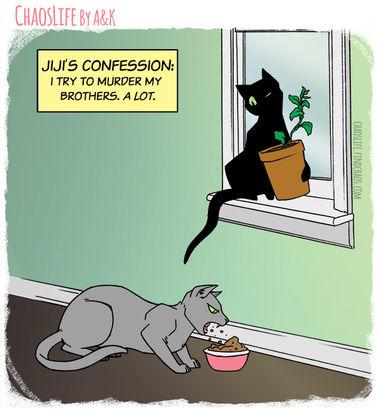 Confession Murder