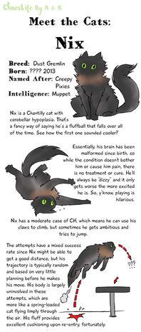 Meet The Cats Nix 1