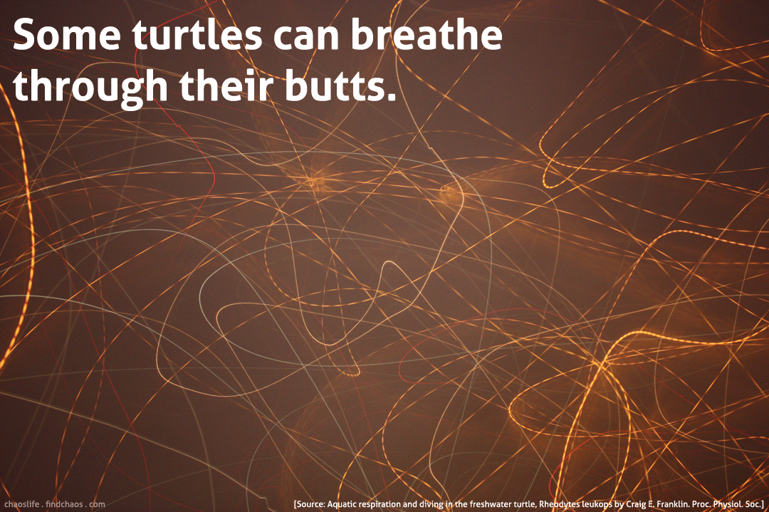 Tangled Turtles