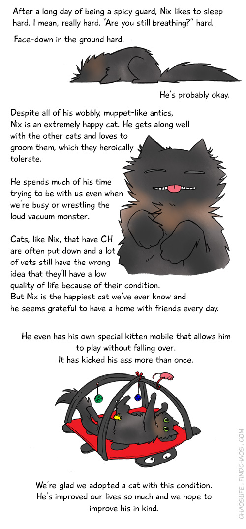 Meet The Cats Nix 3